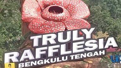 Photo of Lestarikan Tumbuhan Langka, Pemkab Benteng Gelar Truly Rafflesia