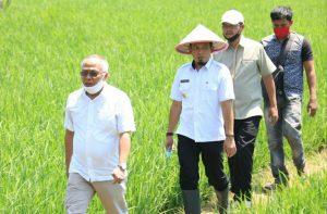 IMG 20200421 135301 300x197 1 Pemkot Bengkulu Pastikan Siap Tampung Hasil Panen Petani Beras
