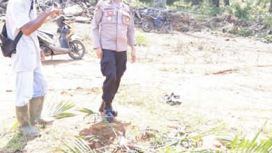 Photo of Bibit Tanaman Sawit Dirusak, PT. MMAS Lapor Polisi