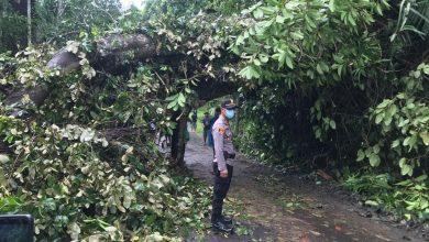 Photo of Banyak Pohon Tumbang, Kabid Humas Polda Bengkulu Himbau Masyarakat Waspada