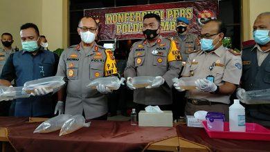 Photo of Sebanyak 40.500 Benih Baby Lopster Ilegal Diamankan Polda Jambi