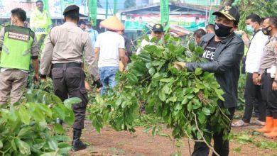 Photo of Wawali Dedy Turun Langsung Evakuasi Pohon Tumbang di Jalur Tanah Patah